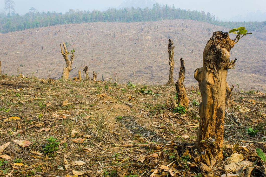 28580753 - slash and burn cultivation, rainforest cut and burned to plant crops, thailand