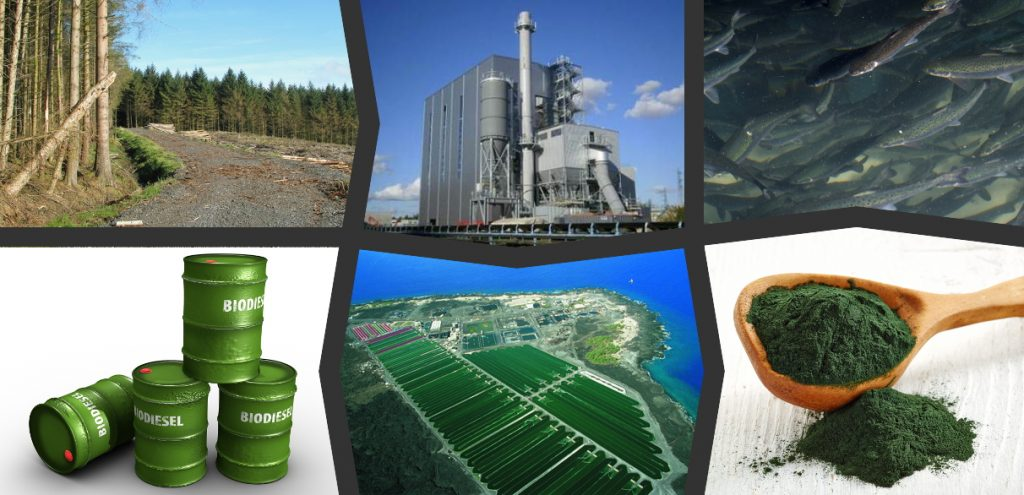 Geoengineering, Marine Microalgae, and Climate Stabilization